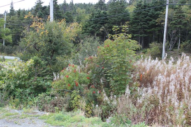 235-237 Beachy Cove Rd-Lot 1-Beachy Cove Hill as your backdrop!